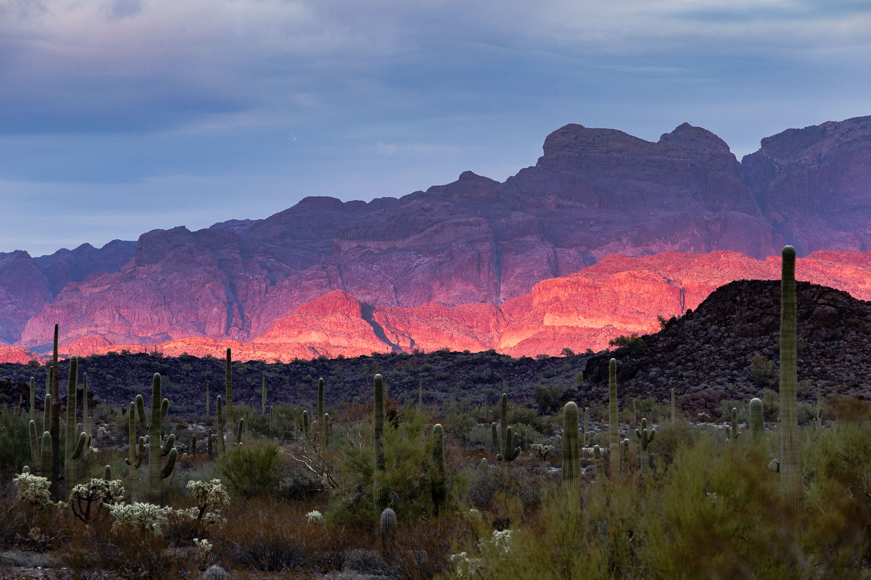 Pink Ajo Mountains