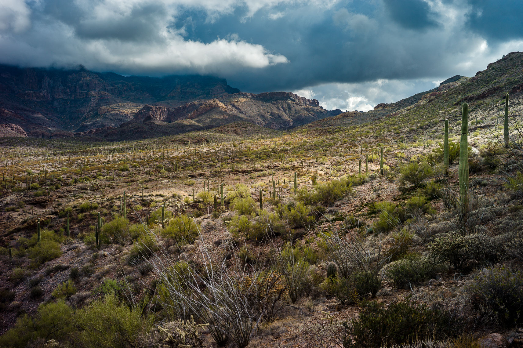 Diablo Mountains, Organ Pipe Cactus NM