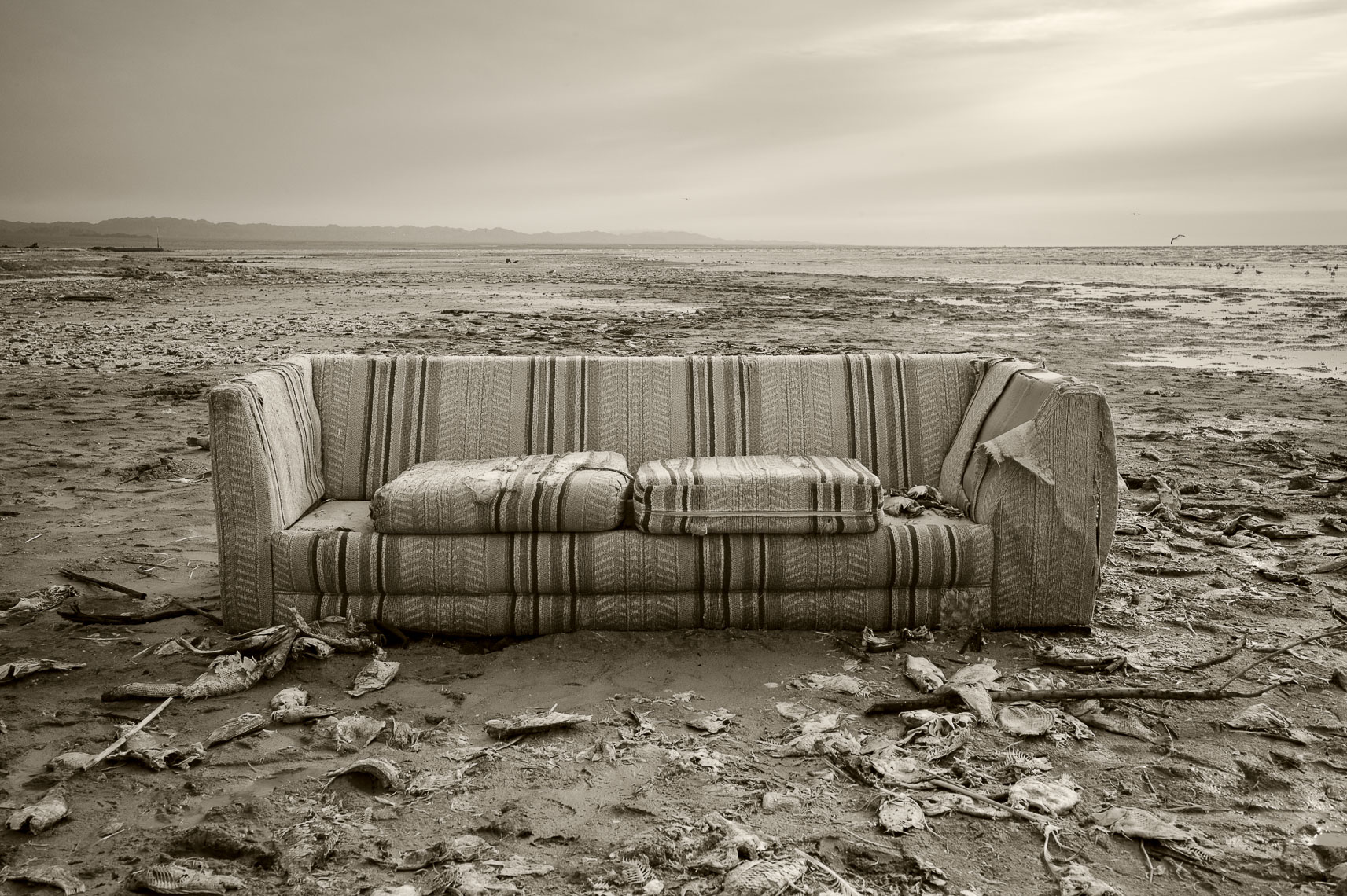Couch and Fish, Salton Sea