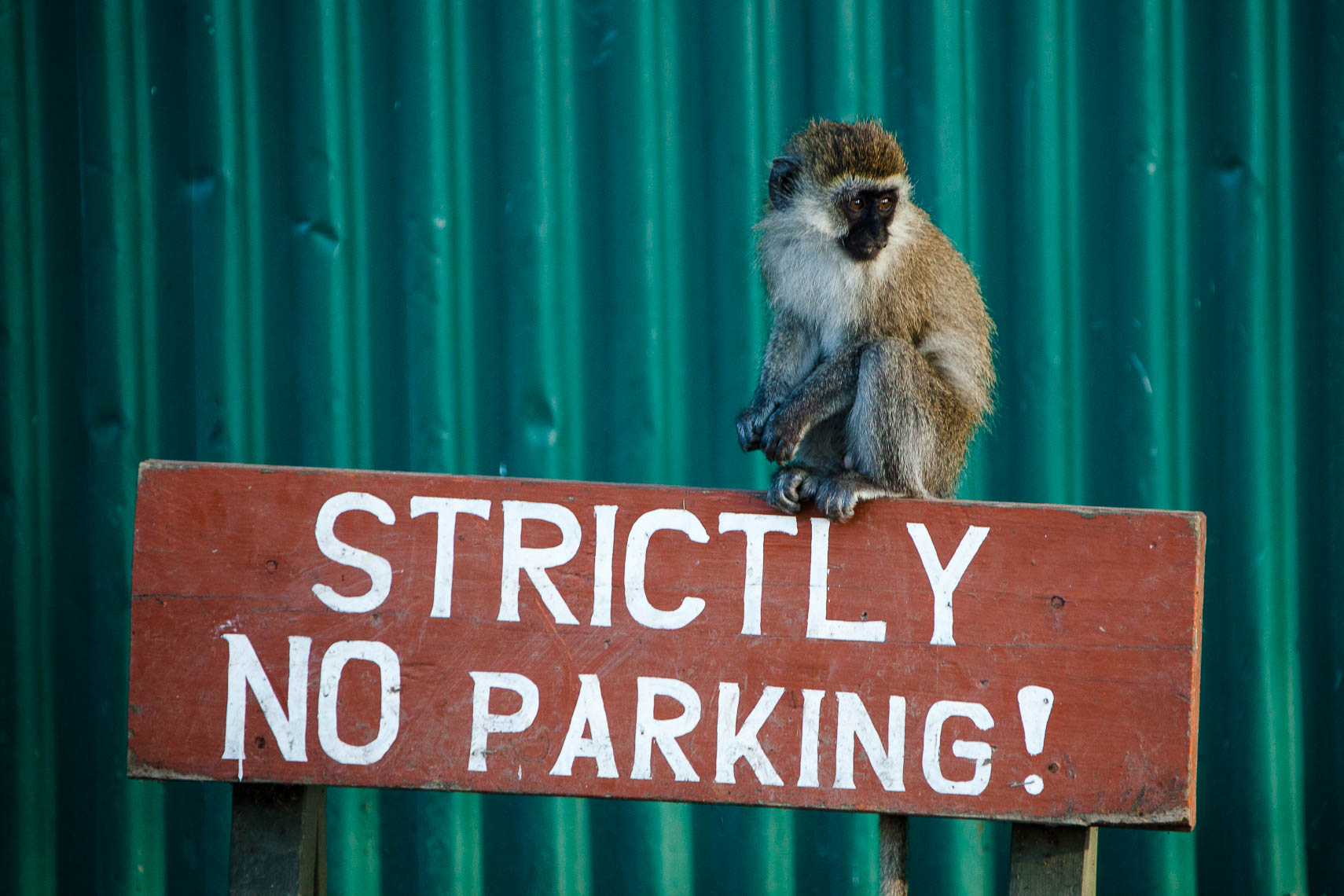Strictly NO parking!