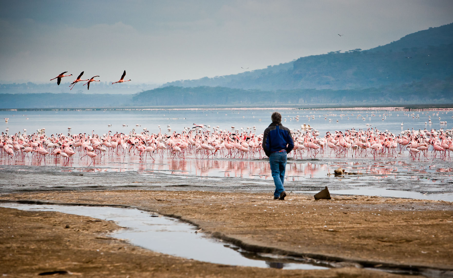 Shores Edge - Nakuru