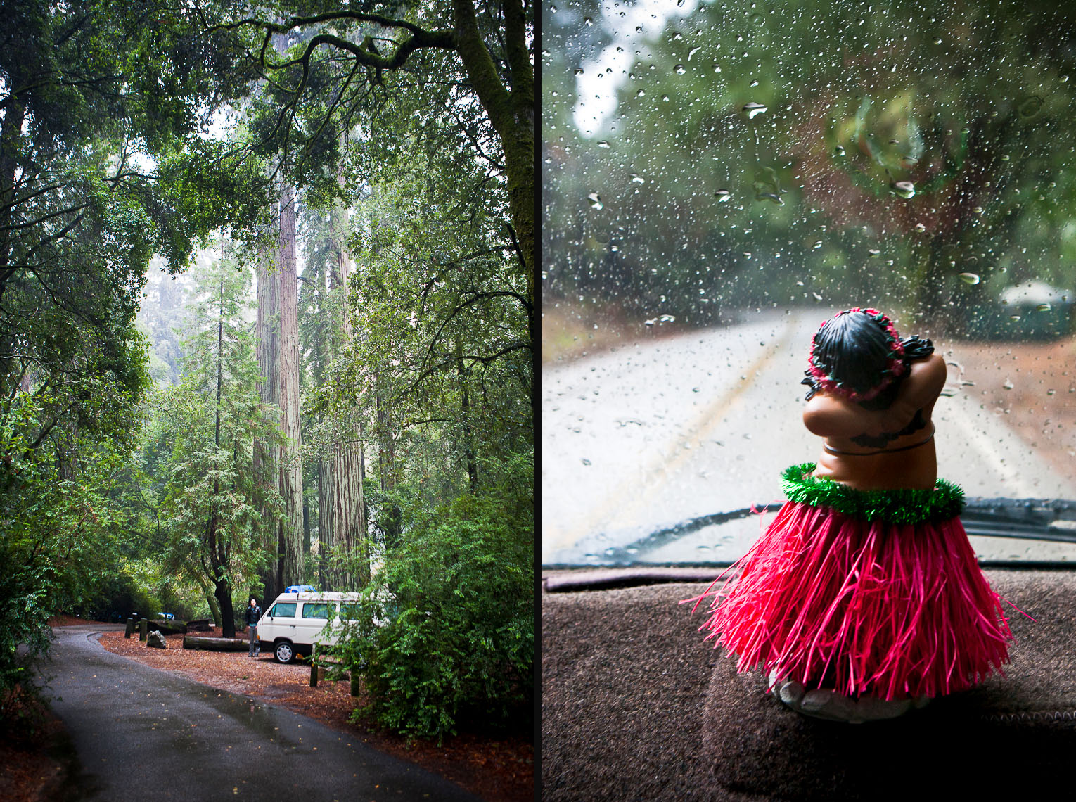 Wet Westy Road Trip - Big Basin State Park